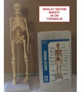 İnsan İskelet Sistemi Modelleri 20 cm 46 cm